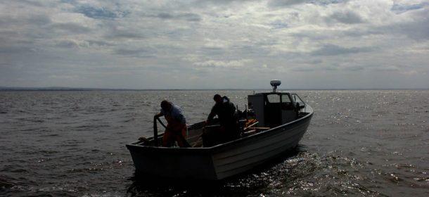Lough Neagh eels